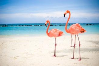 Vuelos a Aruba - Turismo Maso