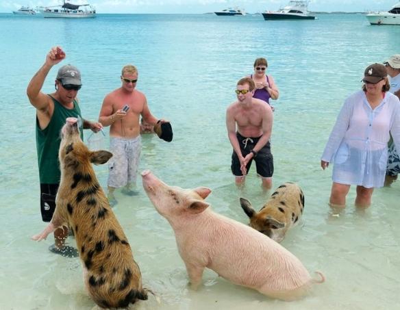 Grupo de personas en la Pig Beach